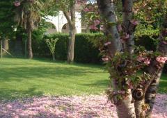 Prunus-in-fiore.jpg